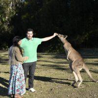 Onde ver Canguru perto de Sydney