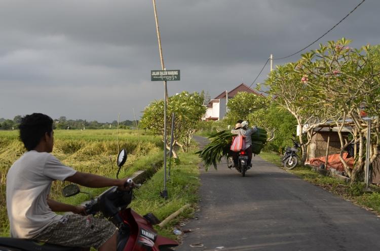 paisagem moto bali  ubud