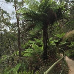 trilhas na Australia