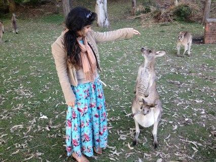 Cangurus soltos na Australia