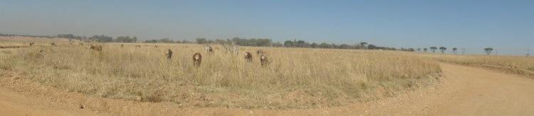 Safari stopover Africa do Sul