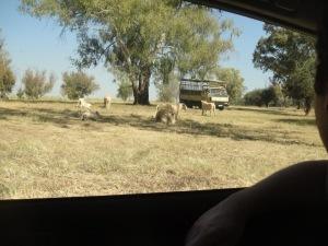 Safari de um dia na africa