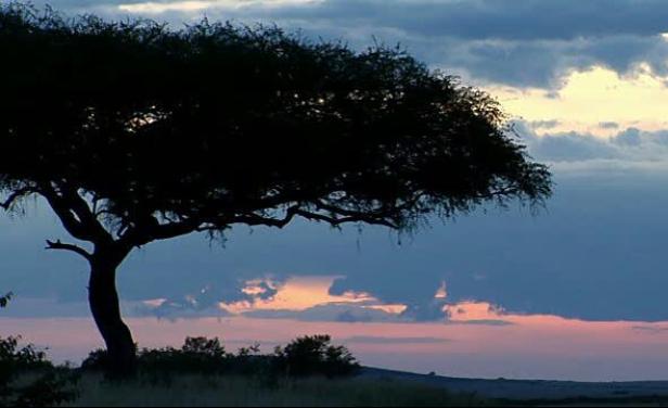 safari quenia